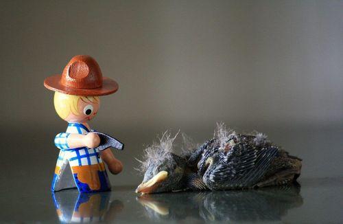 Cowboy vogel