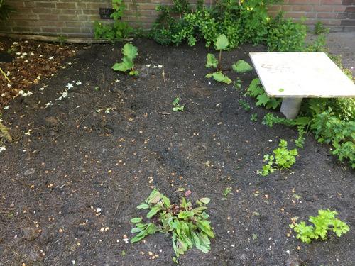 Een tuintje 2
