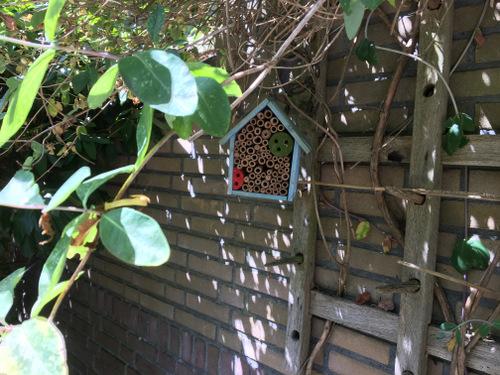Een tuintje 12