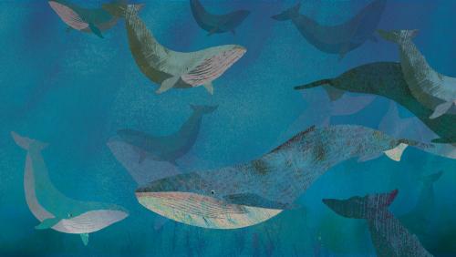 Walvissen Britte Teckentrup